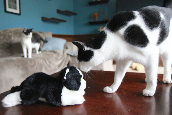 Elsa Clair meets Rover the plush kitty
