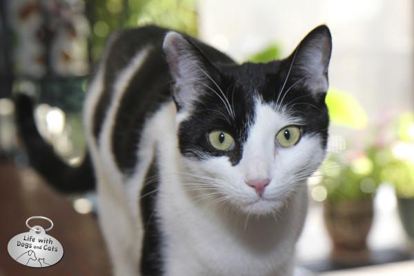 Elsa Clair, cat