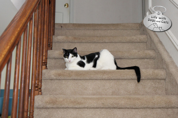 Cat on the stairs