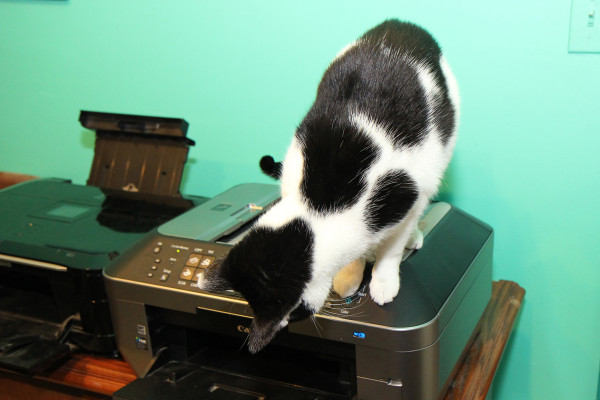 Cats love printers