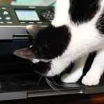 Story: Fit to Print: cats love printers