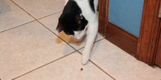 Story: Why do my cats love stink bugs?