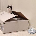 Surprise! A Cat Hides in a Box