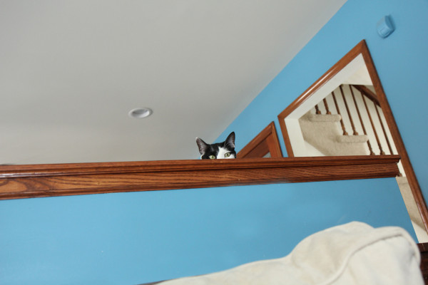 Cat looking over wall