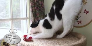 Haiku by Cat: Dog