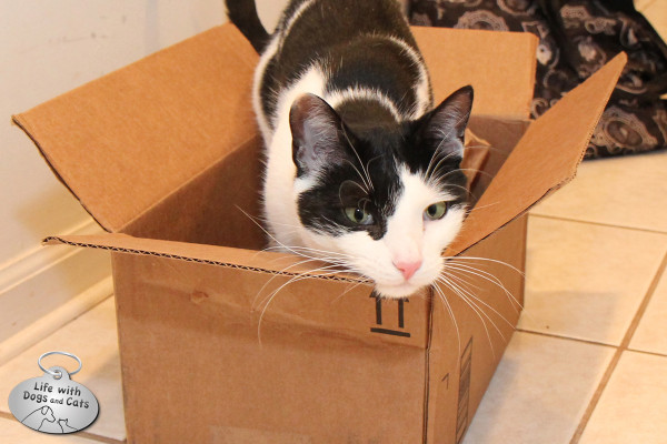 Reasons why cats love boxes: They have corners to rub on.