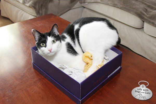 Reasons cat love boxes: Sometimes there's tissue paper in them.