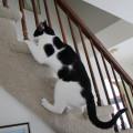 Elsa Clair side stairs 1