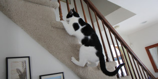 Story: Cat climbs stairs