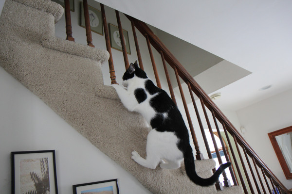 Cat climbs the outside of the stairs.