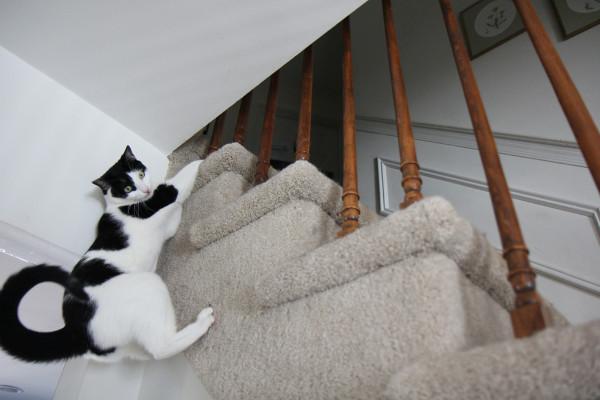 Cat climbs stair stringer.