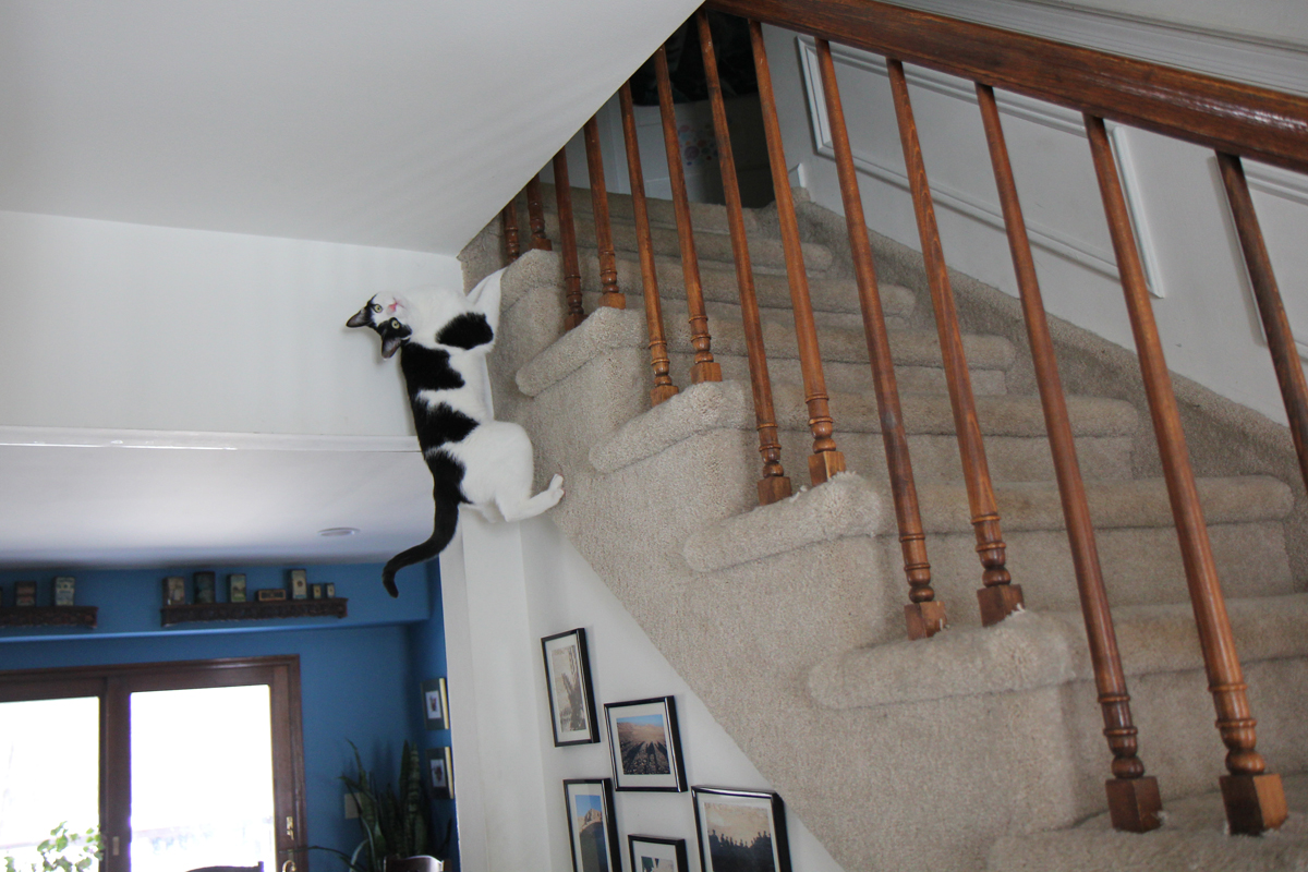 story cat climbs stairs life with dogs and cats. Black Bedroom Furniture Sets. Home Design Ideas