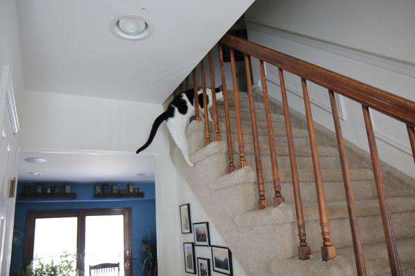 Cat climbing onto stairway.