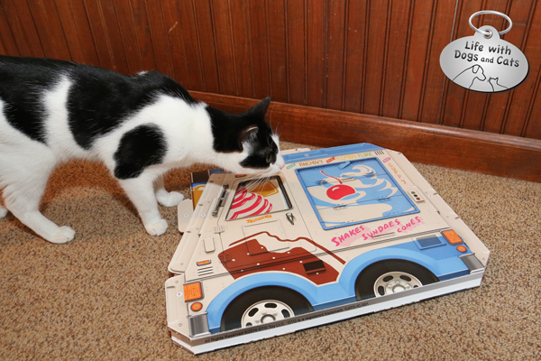 Elsa Clair sniffs flat ice cream truck box on floor