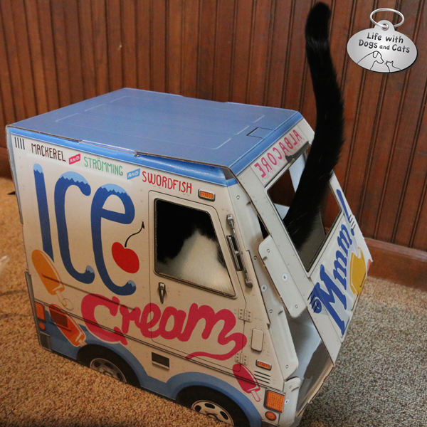 Elsa Clair jumped in the ice cream truck before I had it completely assembled