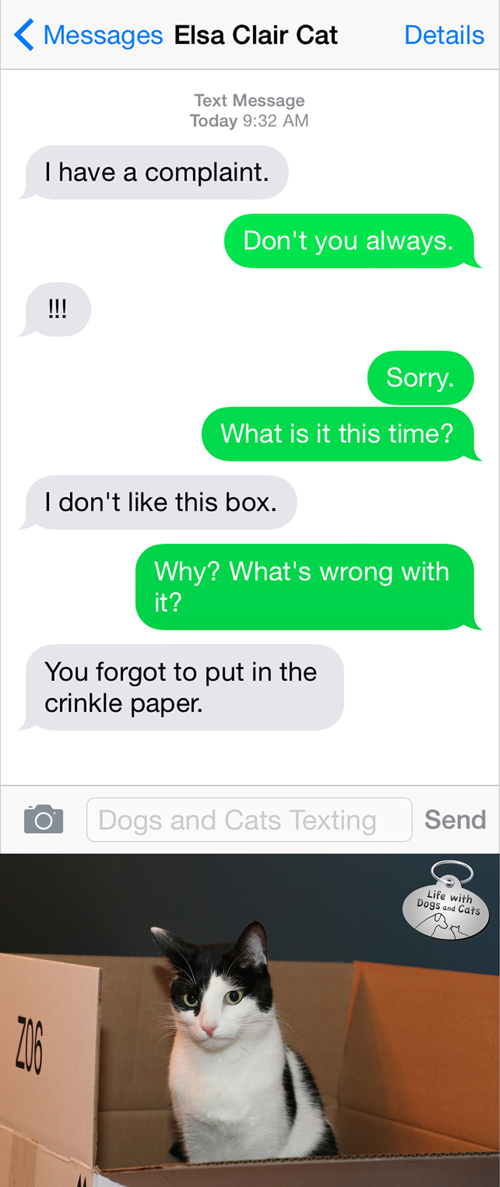 Text from cat: I have a complaint. Text from me: Don't you always!