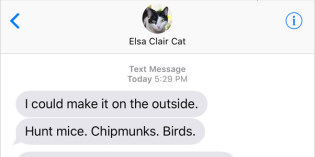 Text from Cat: I could make it there