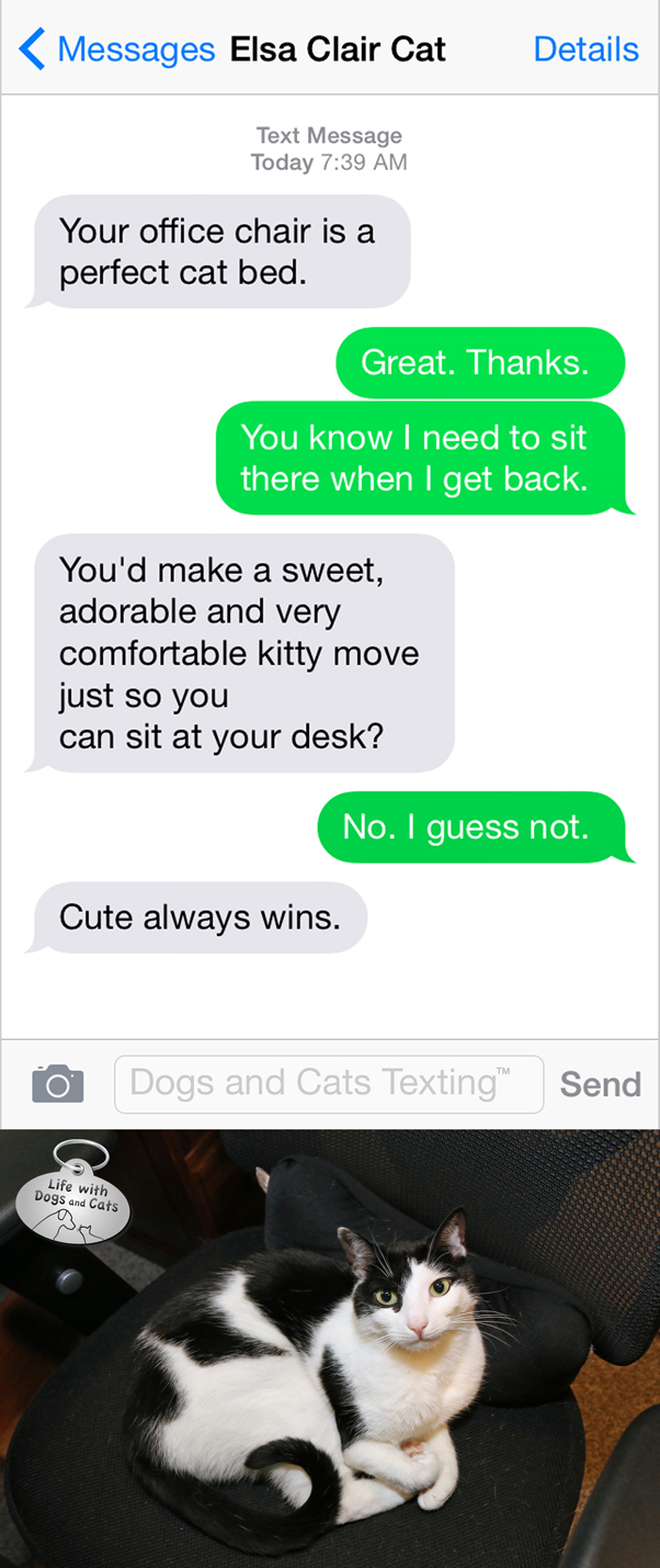 Text from cat: You'd make your adorable cat move? Me: I guess not. Cat: Cute always wins.