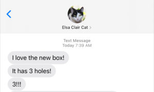 Text from Cat: The new box