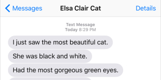 Text from Cat: Mirror, mirror