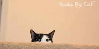 Haiku by Cat: Dragon