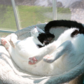 Elsa Clair cat practices for Olympic cat sleeping