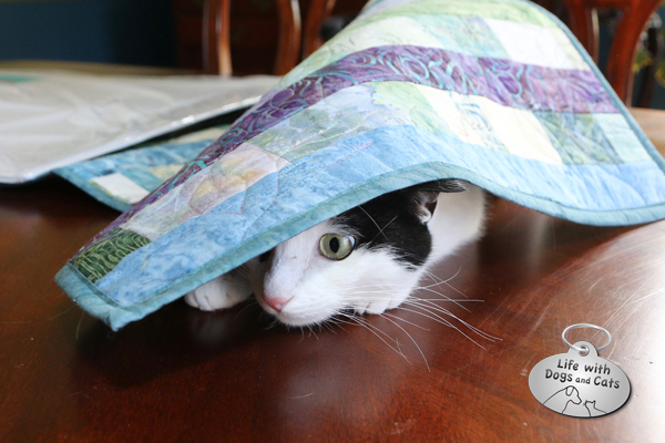 Elsa Clair likes to go under things. She's so sure she's hidden.