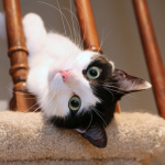 Cat Video: Elsa Clair's Mission Impossible