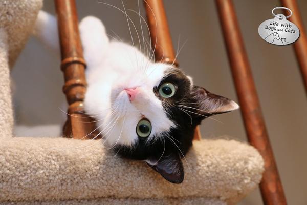 Elsa Clair tiny dragon cat