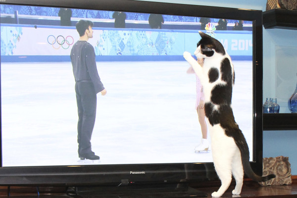Cat wants to be an Olympic figure skater