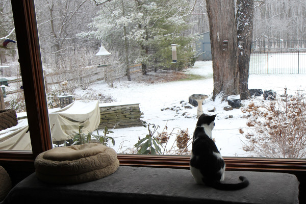 Elsa Clair watches birds snow