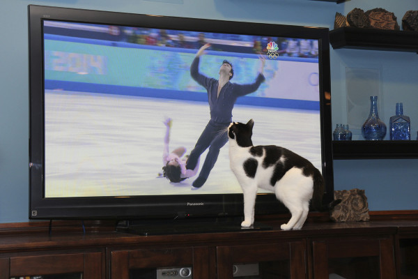 Cat watches figure skating