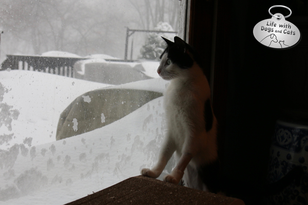 Elsa Clair watches the snow fall during the blizzard