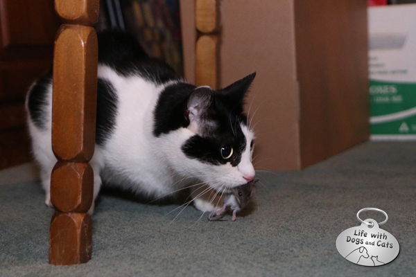 Elsa Clair has her mouse under a table in the basement, and she's not sharing.