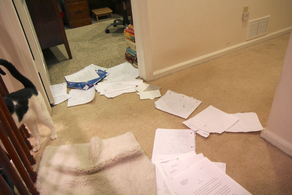 Elsa Clair the cat walks away from completed paperwork.