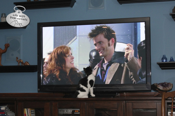 World Cat Day activity: Catching up on a favorite TV series.