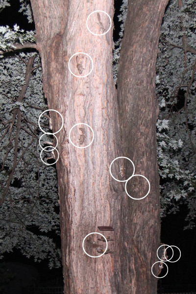 12 flying squirrels in one photo; I've circled each of them to make it easier to see.