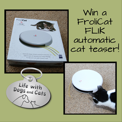 Win a FroliCat FLIK electronic toy