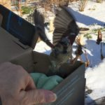 The Bird in the Box in the Basement: How I rescued an injured bird