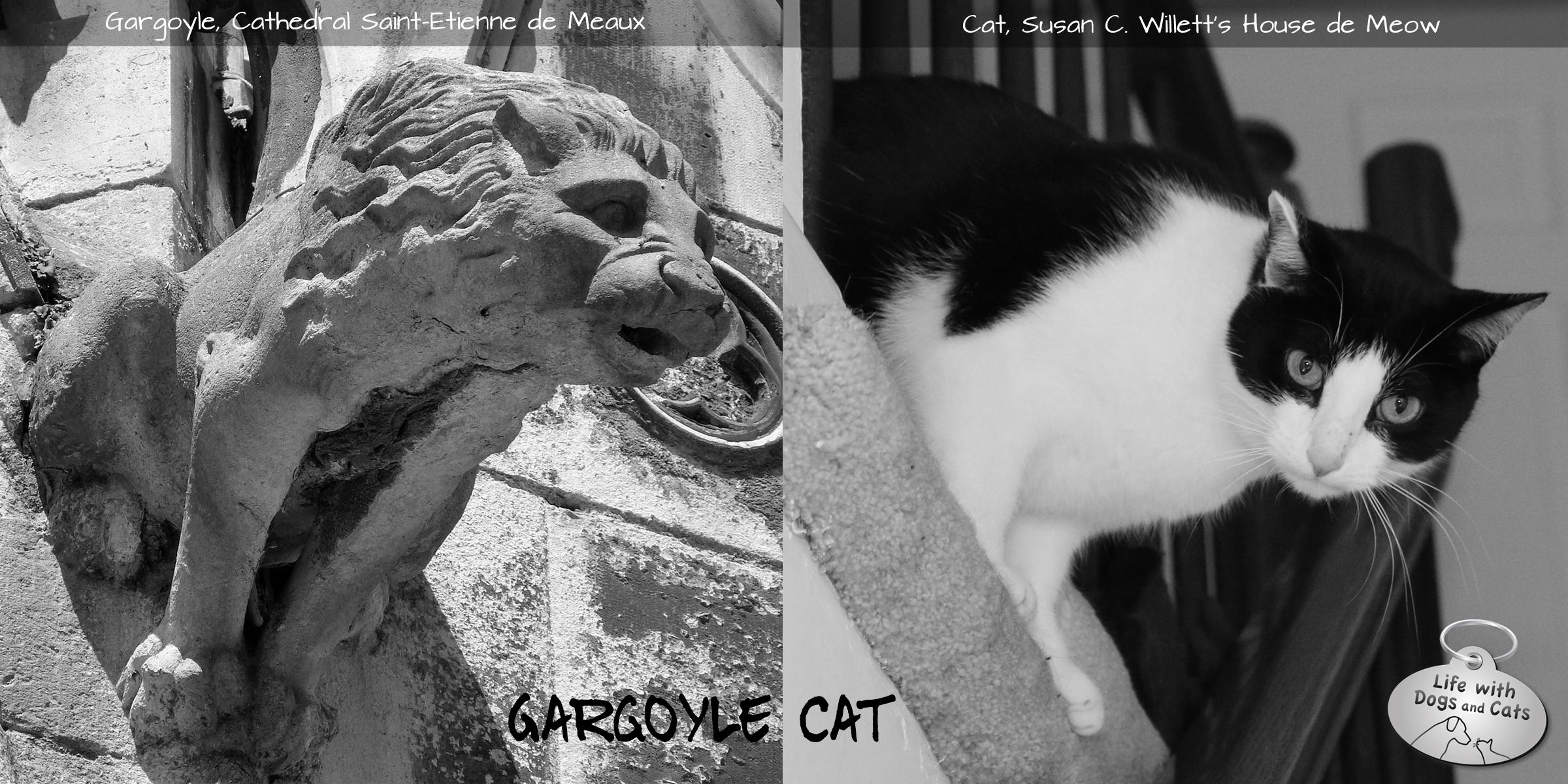 Cat imitating art gargoyle