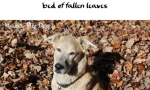 Haiku by Dog: Simple