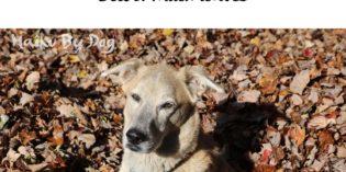 Haiku by Dog: Simple