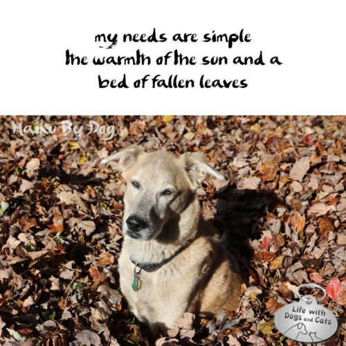 my needs are simple / the warmth of the sun and a / bed of fallen leaves