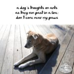 Haiku by Dog: Ants