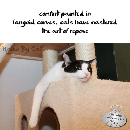 Haiku by Cat: comfort painted in / languid curves, cats have mastered / the art of repose
