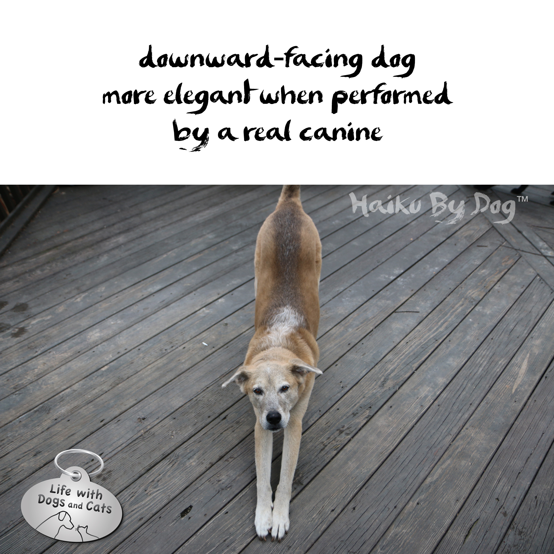 downward-facing dog / more elegant when performed / by a real canine #HaikuByDog