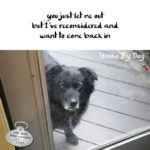 Haiku By Dog: Reconsider