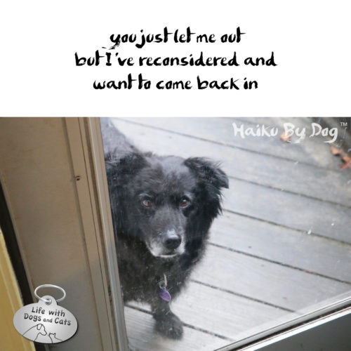 #HaikuByDog you just let me out but I've reconsidered and want to come back in