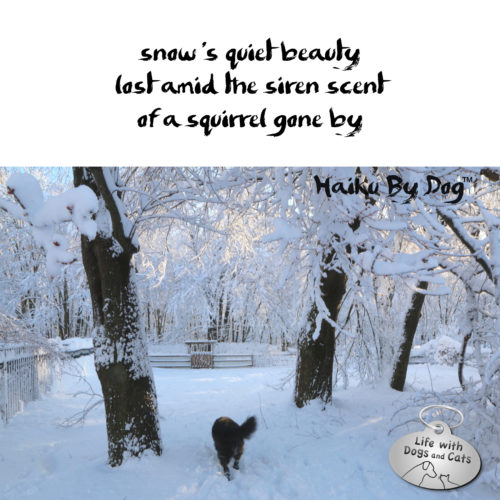 snow's quiet beauty / lost amid the sirent scent / of a squirrel gone by. #HaikuByDog #HaikusDay #MicroPoetry