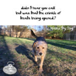 Haiku By Dog: Hear